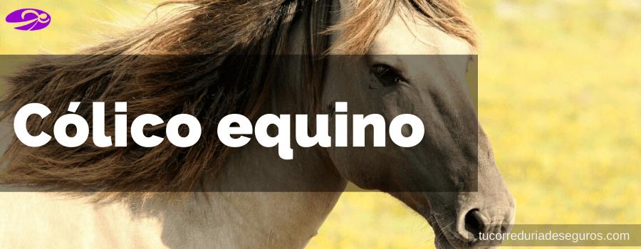 cólicos en caballos
