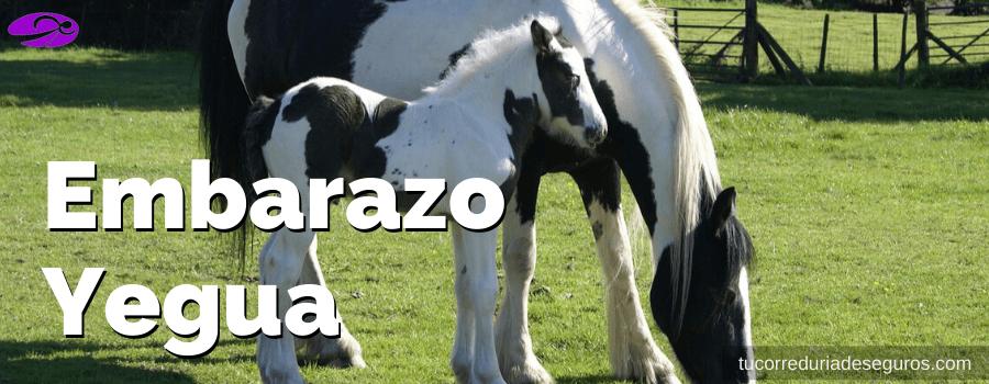 Embarazo Yegua