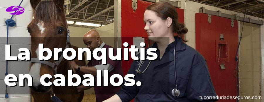 La bronquitis en caballos. Causas, síntomas, tratamiento y pronóstico