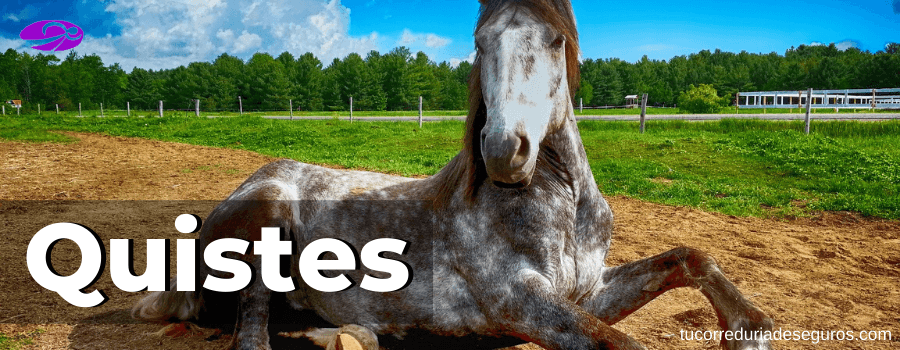 Quistes en los caballos