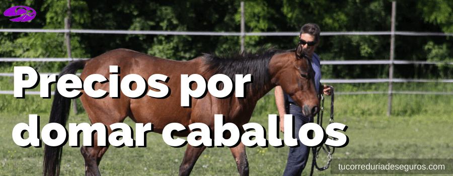 Precios por domar caballos