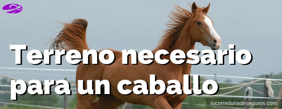 Terreno necesario para un caballo