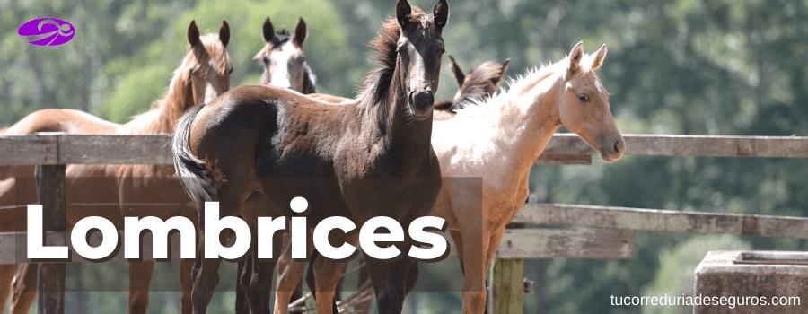Lombrices en caballos