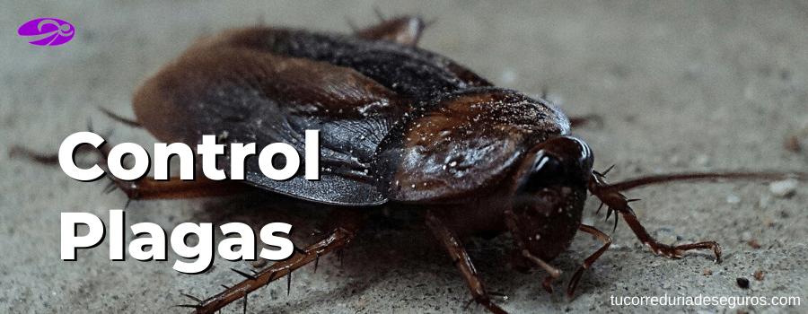 control plagas seguros comunidades